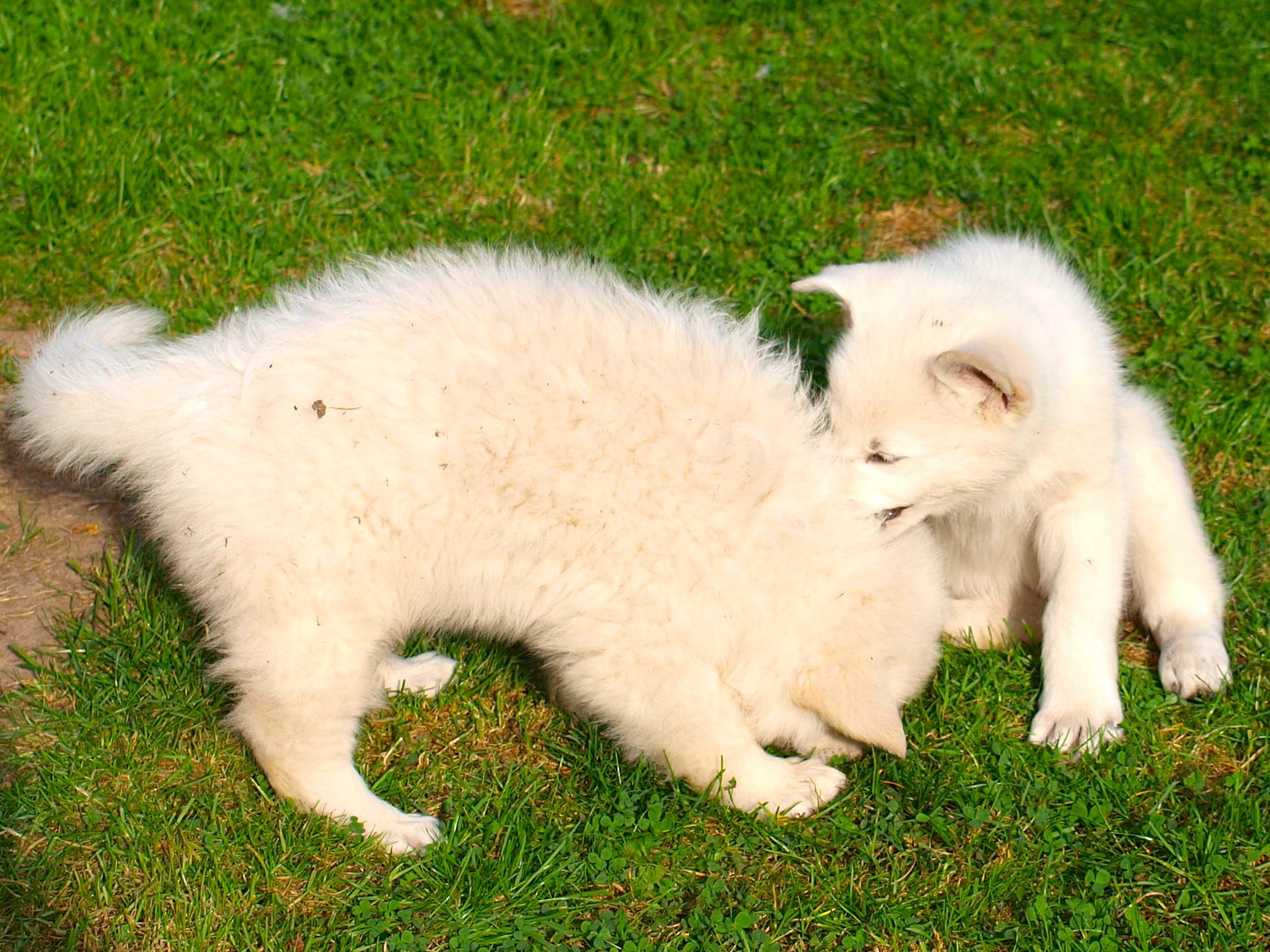 Cinder & Leona