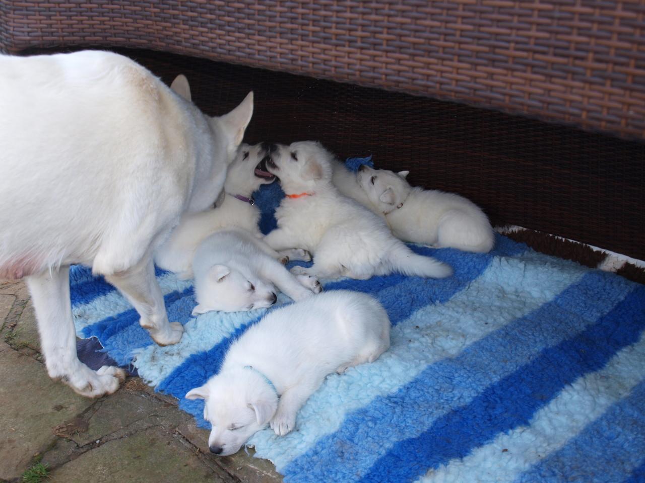 Mama schaut nach den Kleinen