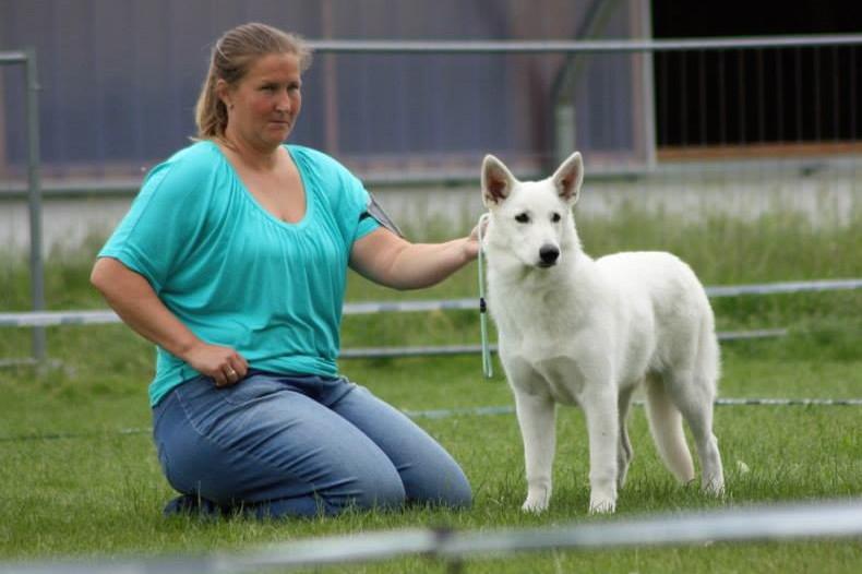 6 Monate - bei einer Spezialausstellung für Weiße Schweizer Schäferhunde
