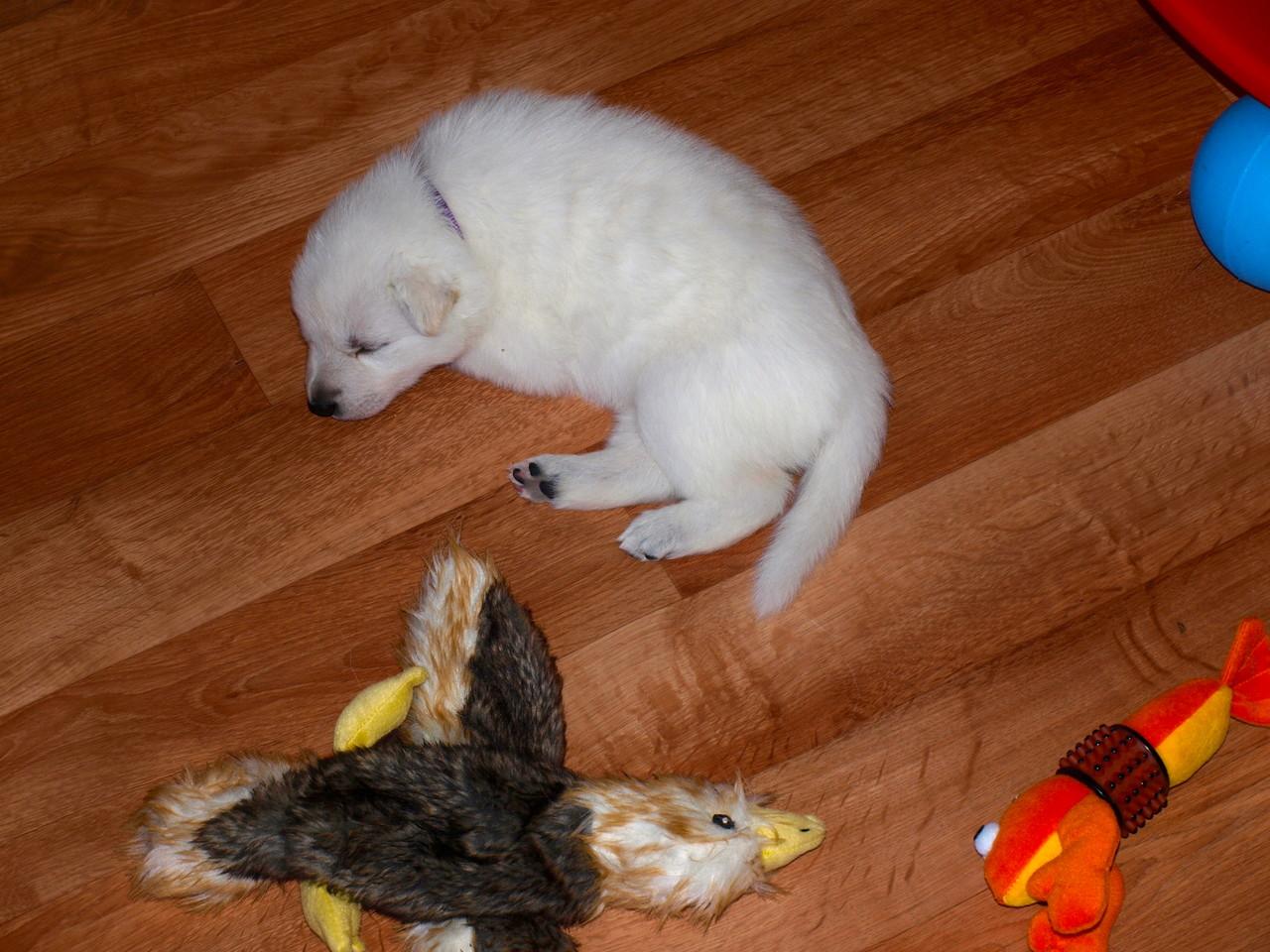 Fräulein Delfin ist mittendrin eingeschlafen