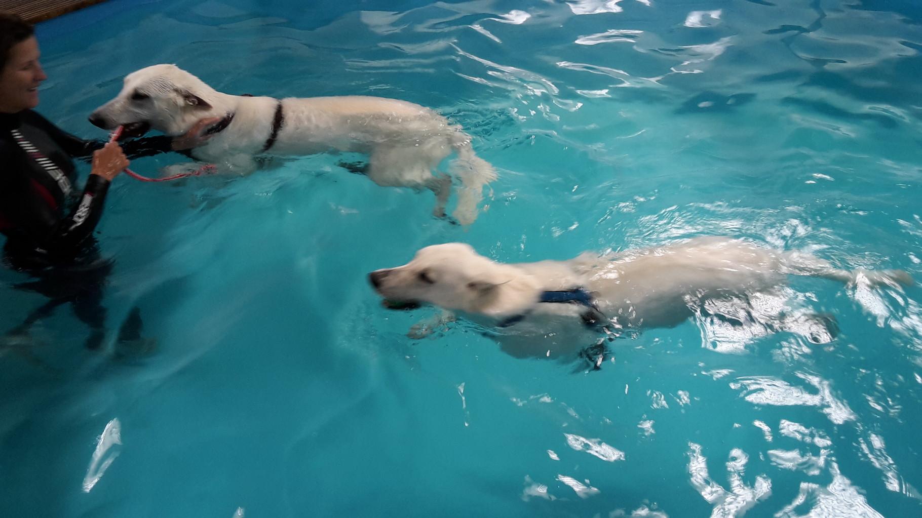 ...waren zusammen im Becken