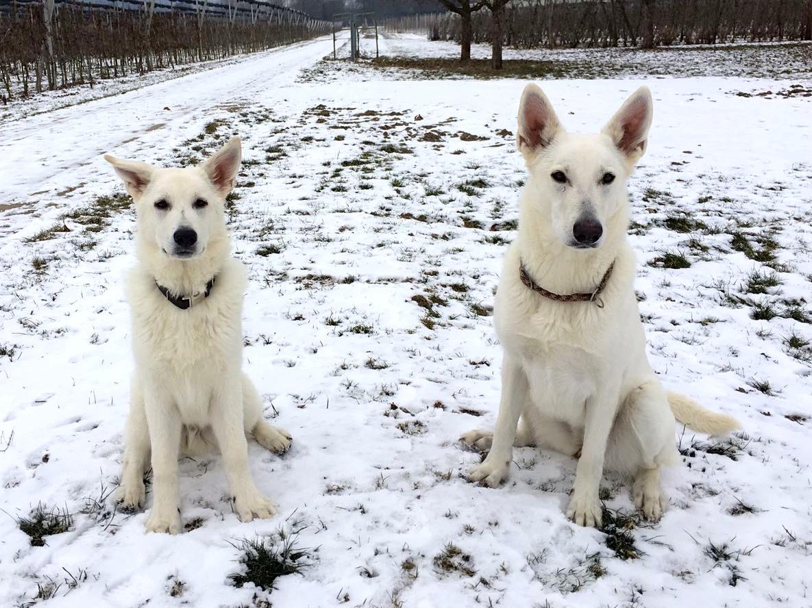 Merlin und seine Tante Abey leben zusammen