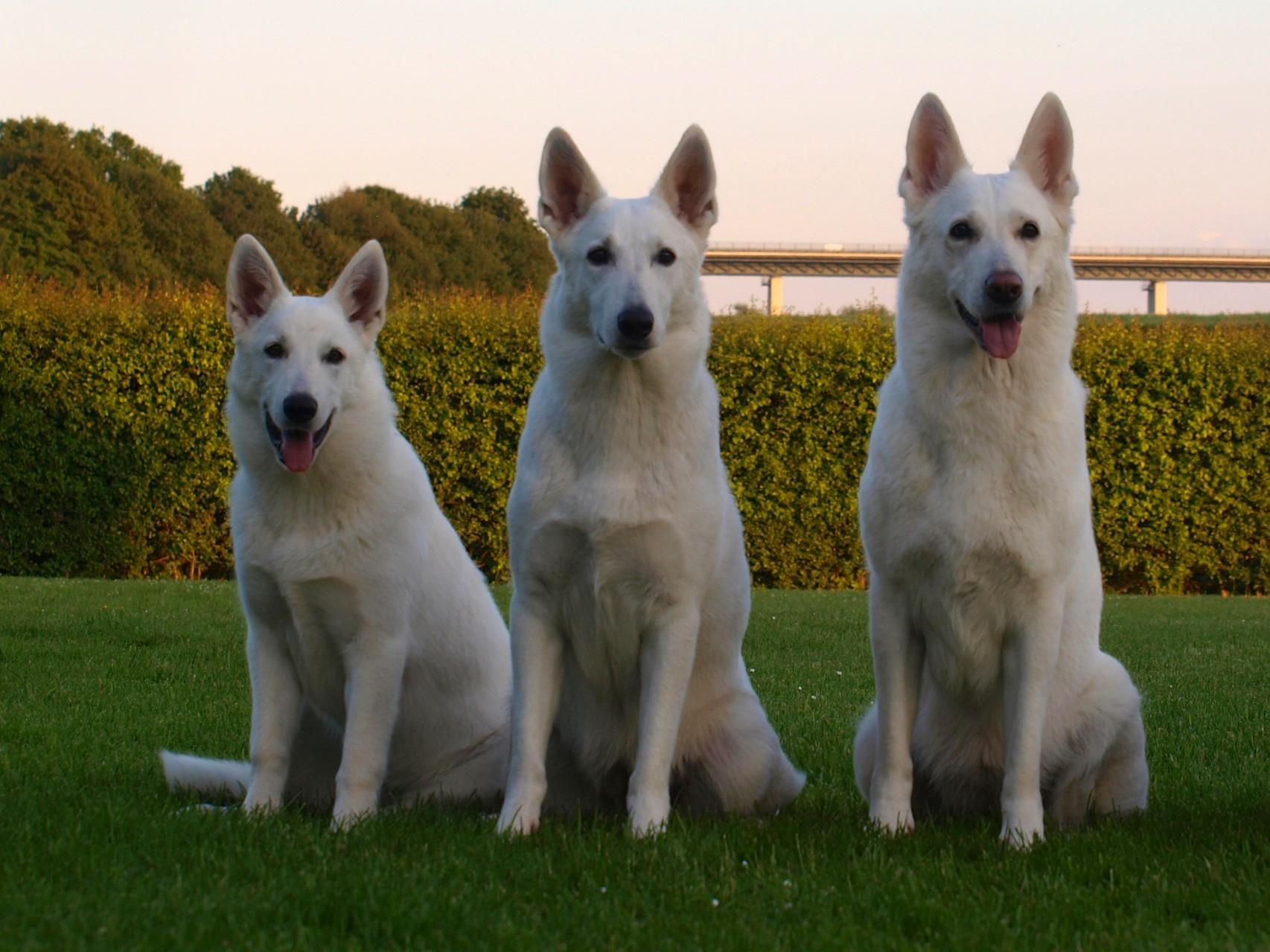 die drei weißen Damen