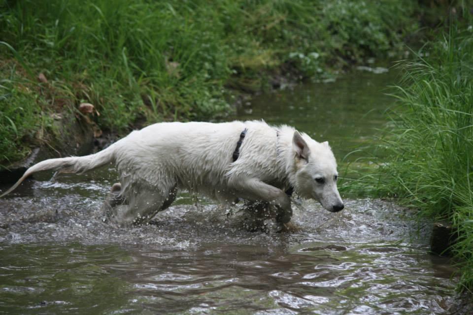Milow geht auch gerne ins Wasser