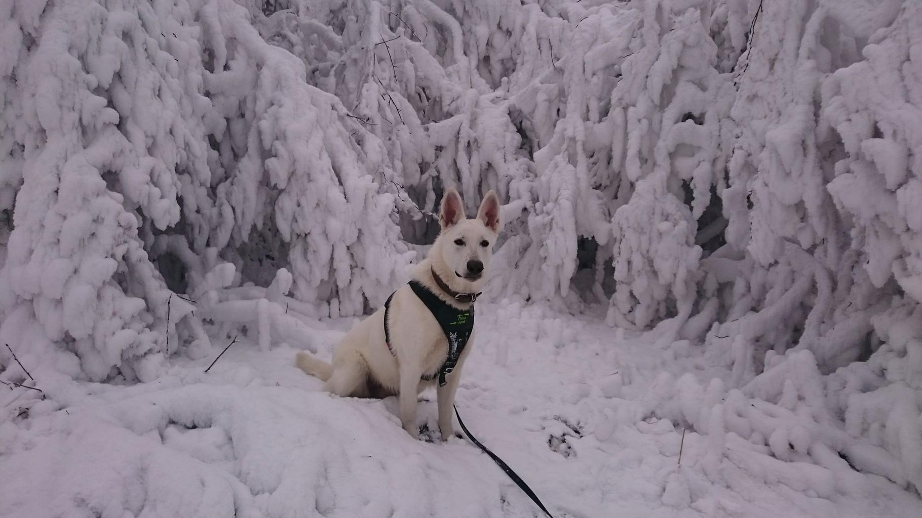 1. Geburtstag im Schnee