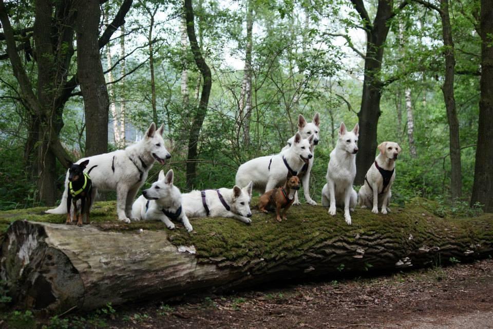 Otto, Milow, Akira, Aiyana, Emma, Milka, Luigi, Gaia, Maya