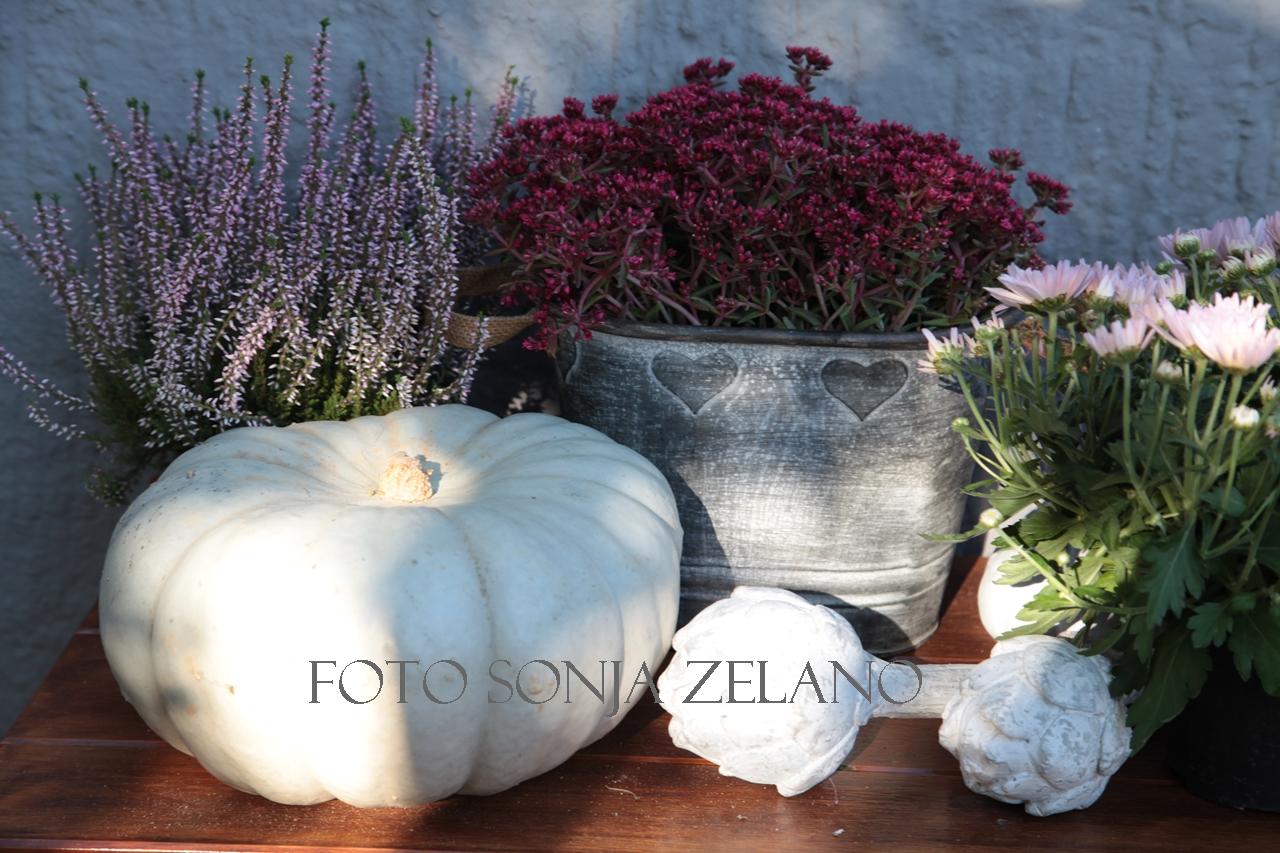 Gartenmärkte im September