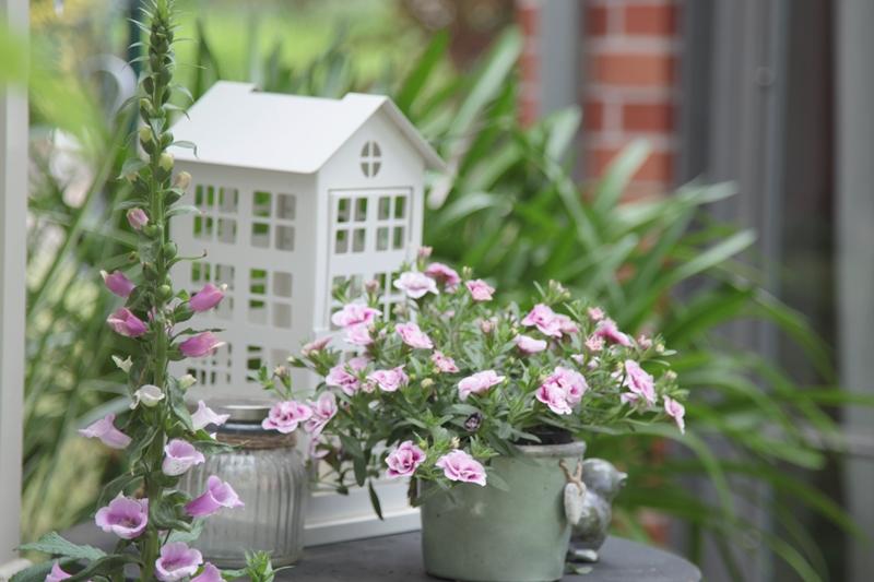 Der Garten im Mai
