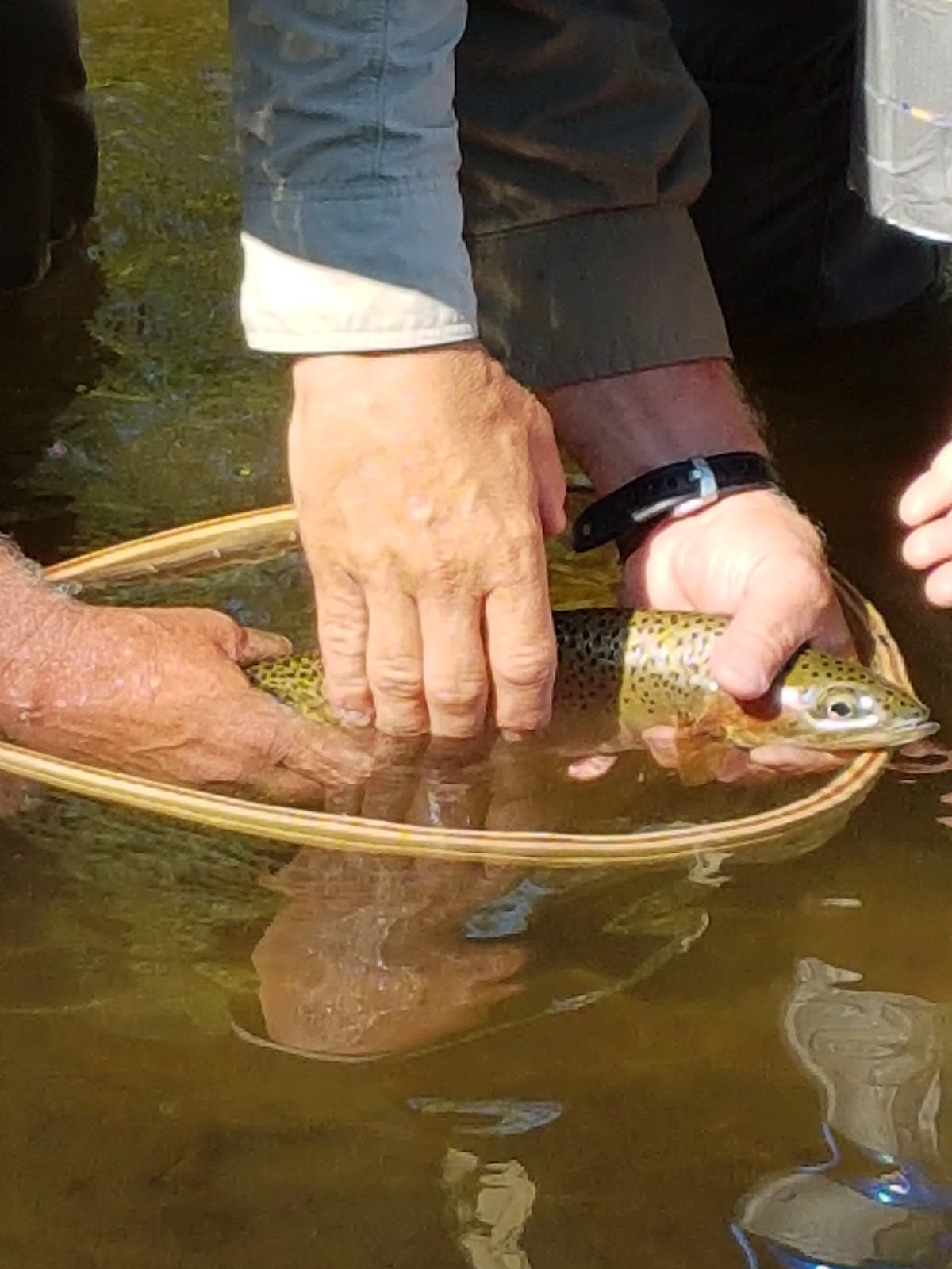 La cutthroat trout pêchée par Pete