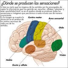 En el cerebro se producen las emociones.