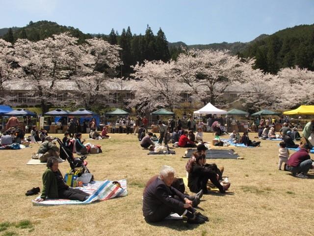 それまでは近くの公園で開催だった、熊野近辺でも有名な桜祭り。「がっこう」での開催は地元の人の念願でした。