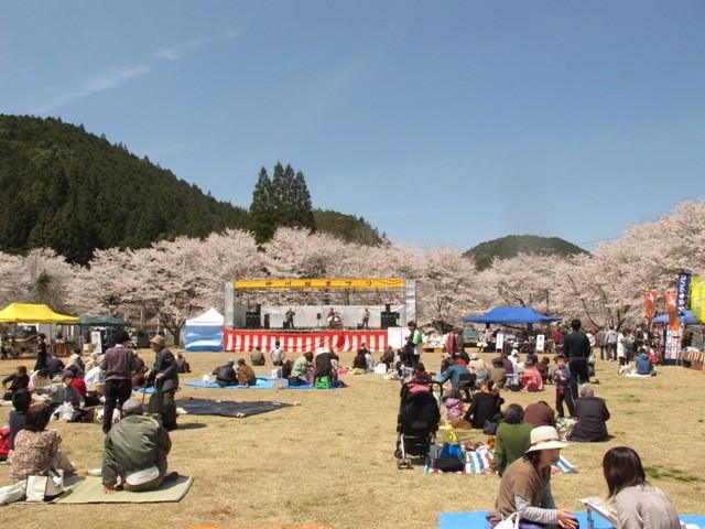 2012年の春からは、この「がっこう」の校庭で桜祭りが開催されました。