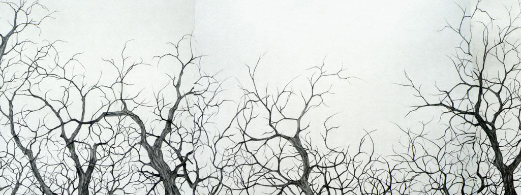 """Les racines du ciel"""