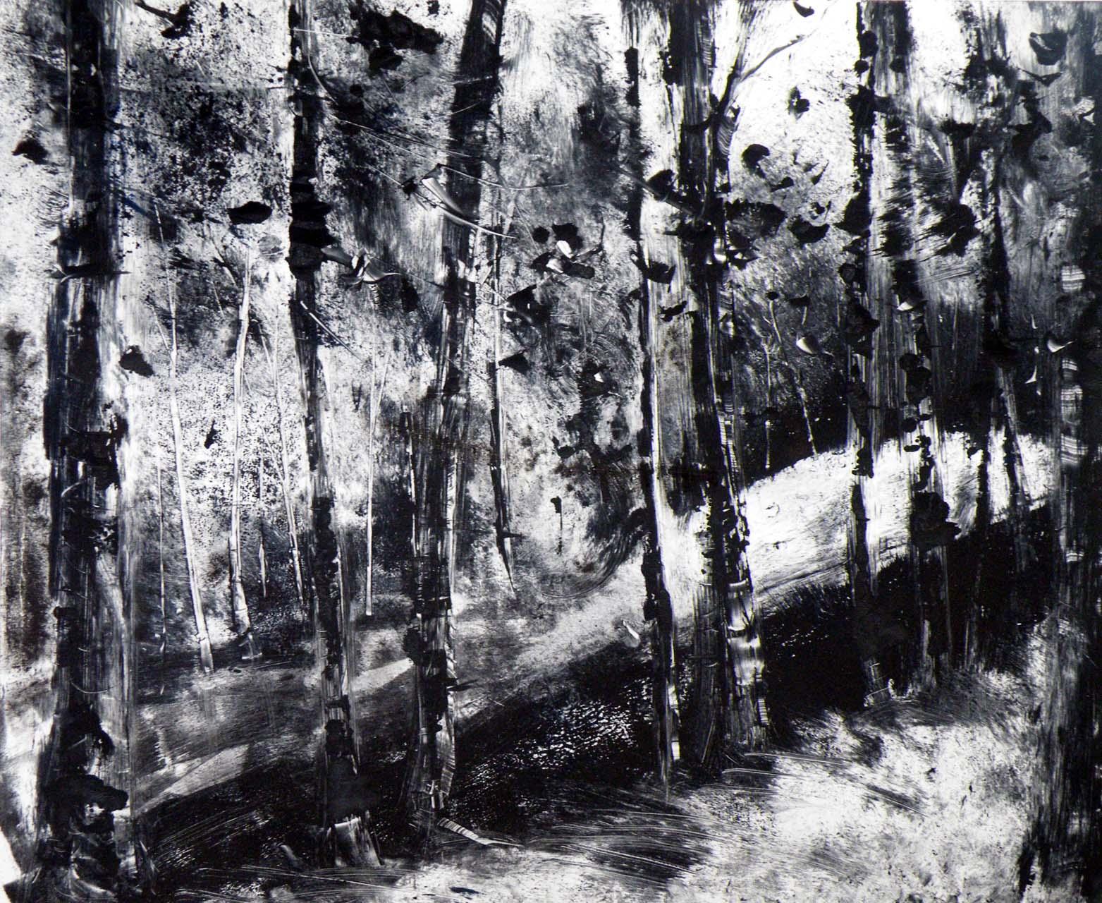 """""""Entrons dans la forêt"""""""