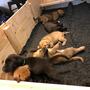 Puppy Alarm