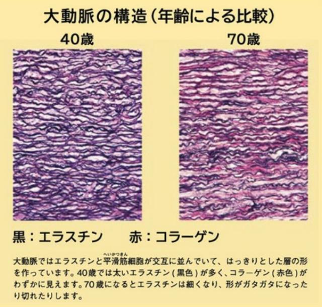 高純度エラスチン コラーゲン 大動脈