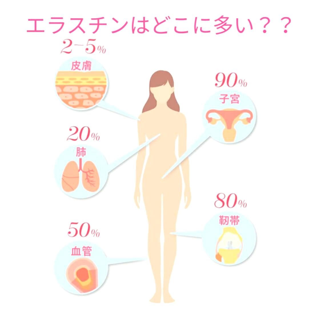 エラスチン美容 子宮 靭帯 血管 肺 皮膚