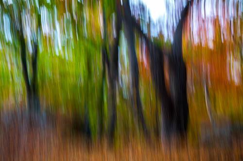 the tree rhapsody