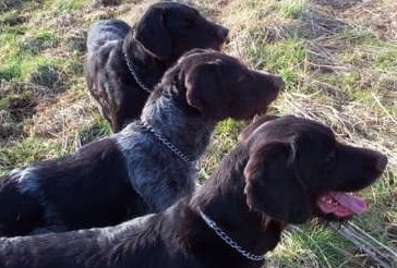 Qualle (VGP 1/348); Quadu (VGP 1/346) ; Saba (VGP 1/348). Hat jemals  irgendwer 3 Hunde mit solcher Punktzahl geführt? ich glaube nicht...