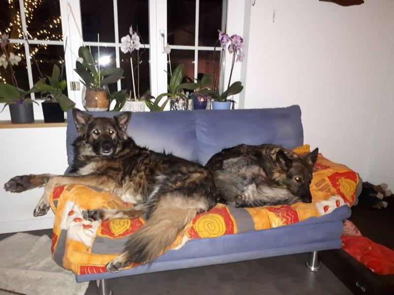 unser Sofa....