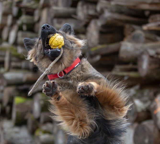 Gini versucht den Ball zu fangen
