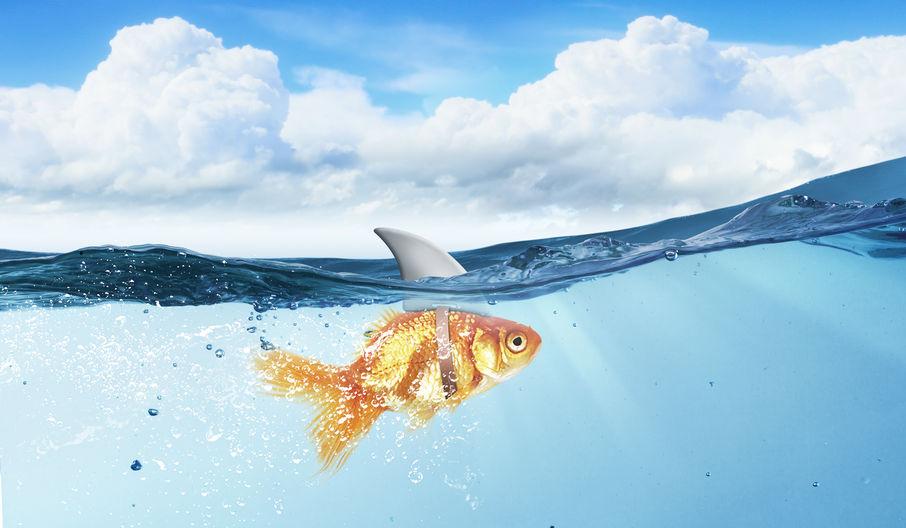 Blogartikel: Funktion von Managementmoden