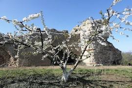 Magie d'aqueduc et de cerisiers en fleur