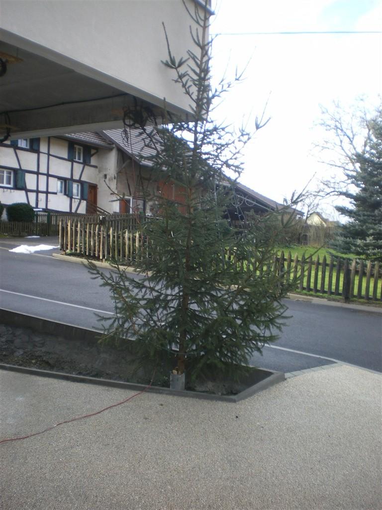 Samedi 15 décembre : le sapin de noël a trouvé une nouvelle place