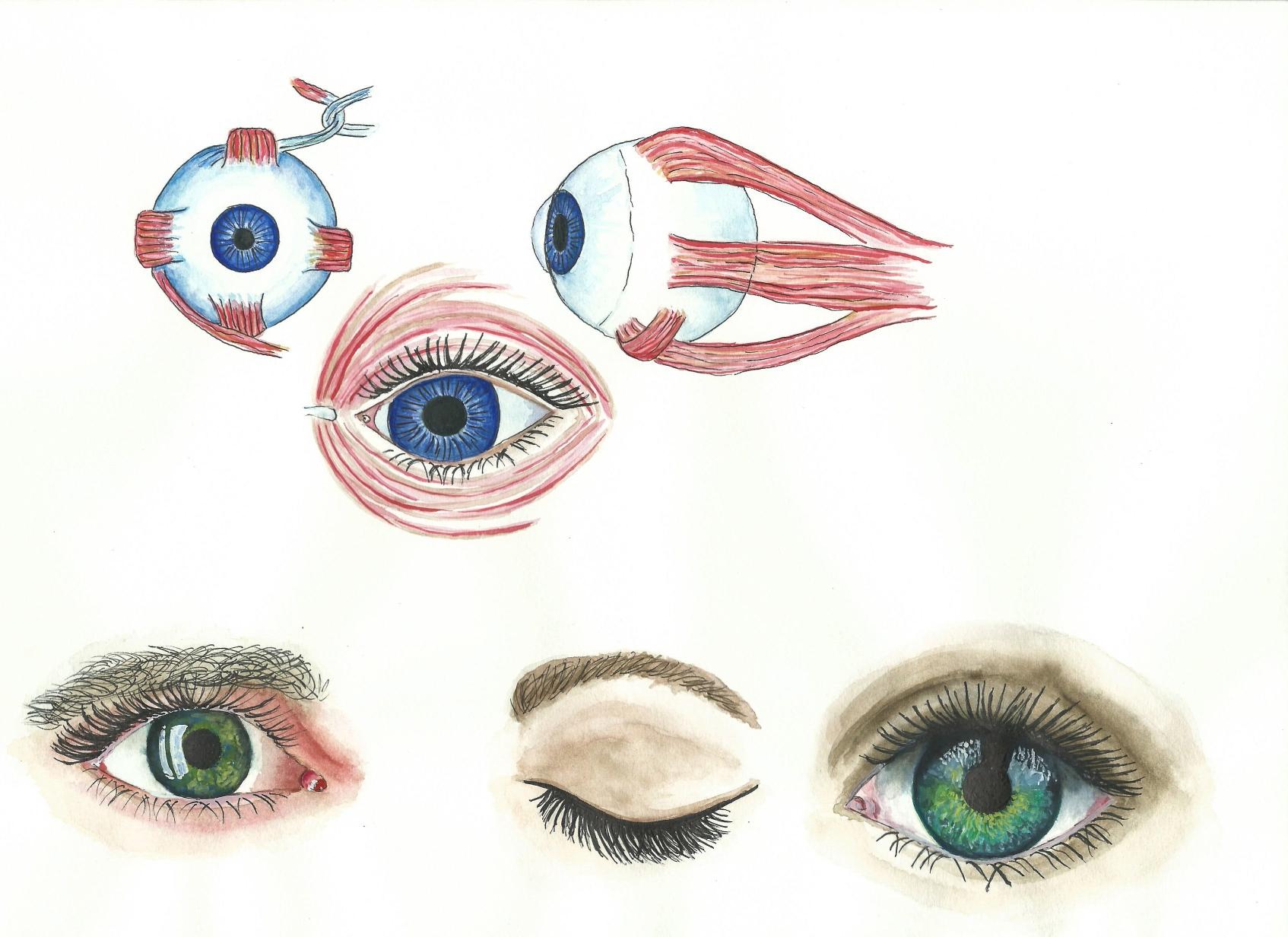 anatomies III