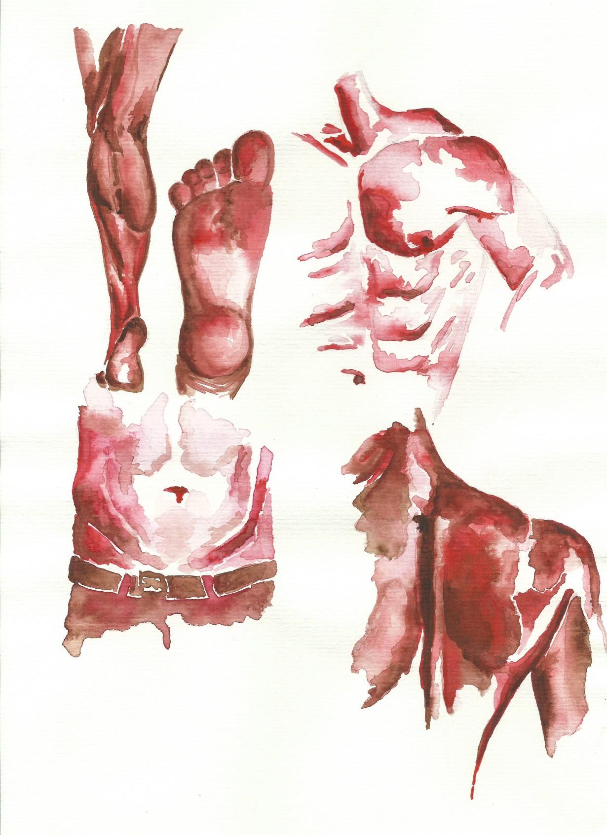 anatomies I
