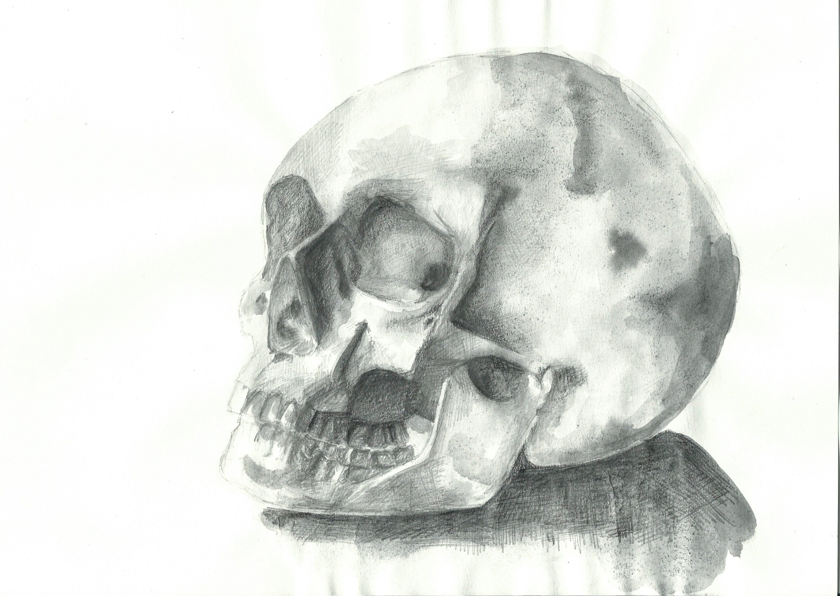 anatomies II