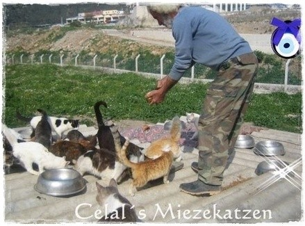 Tierschutztürkei, Izmir, Örnekköy , Celal Üner,Celal´s Tiere,Pate werden,Tieren helfen, TESSA e.V.,