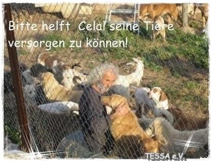 Tierschutztürkei, Izmir, Örnekköy , Celal Üner,iDO-World,Celal´s Tiere,Pate werden,Tieren helfen,TESSA e.V.,