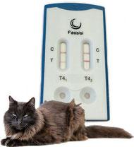 Die Fassisi T4 Testkassette befindet sich im Hintergrund, im Vordergrund liegt eine Katze