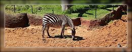 パース動物園