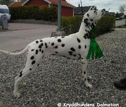 Kryddhundens Ice-Vanilla (HUA)...07.05.2017