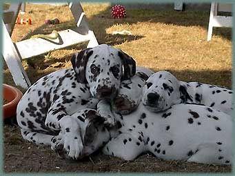 Angie vom Furlbach mit ihren Geschwistern...August 2003