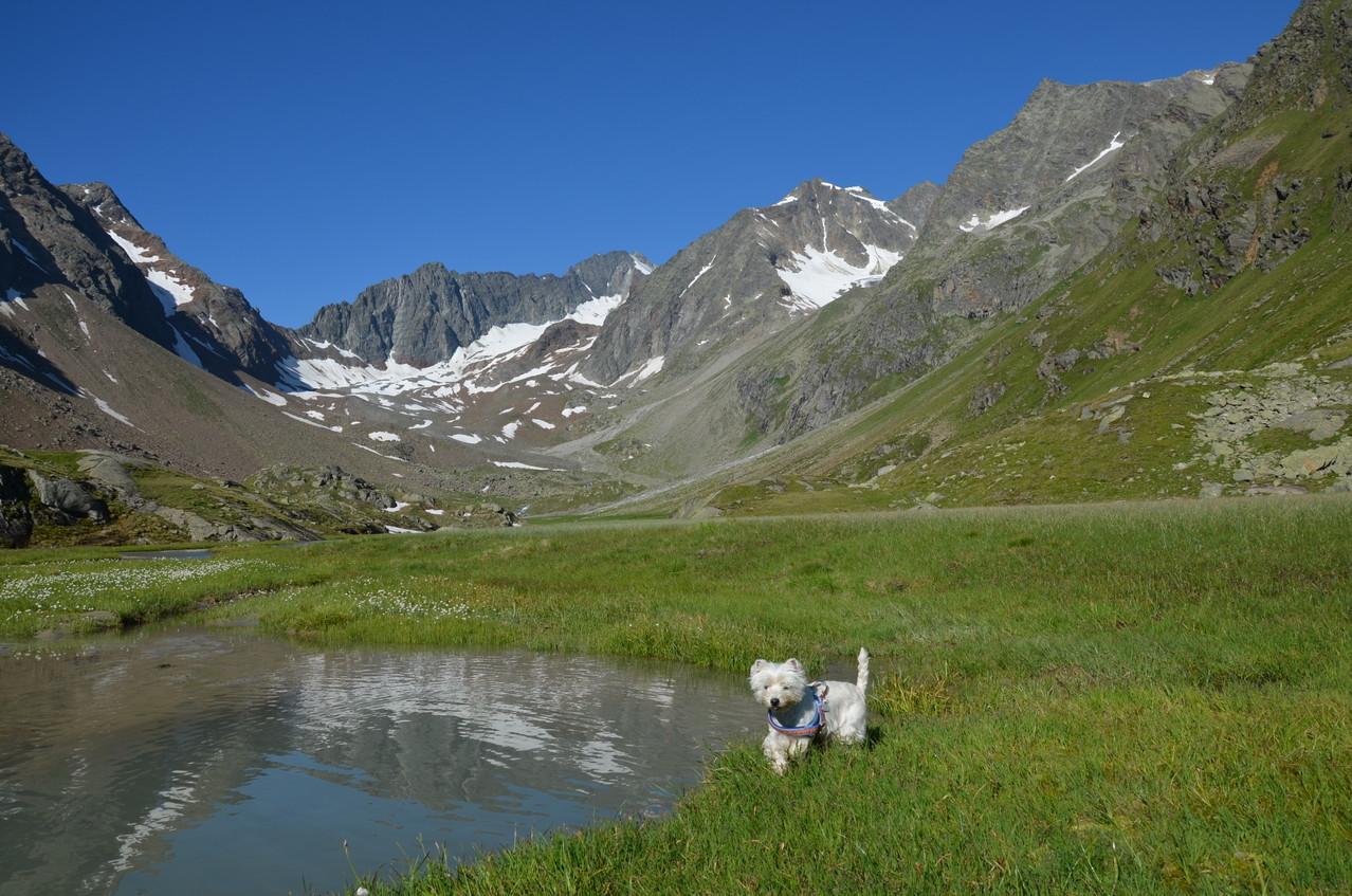 Gulietta fühlt sich auch in den Bergen sehr wohl