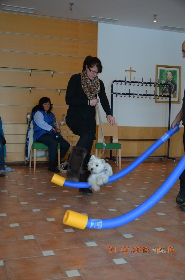 Therapiehundeausbildung von Gulietta