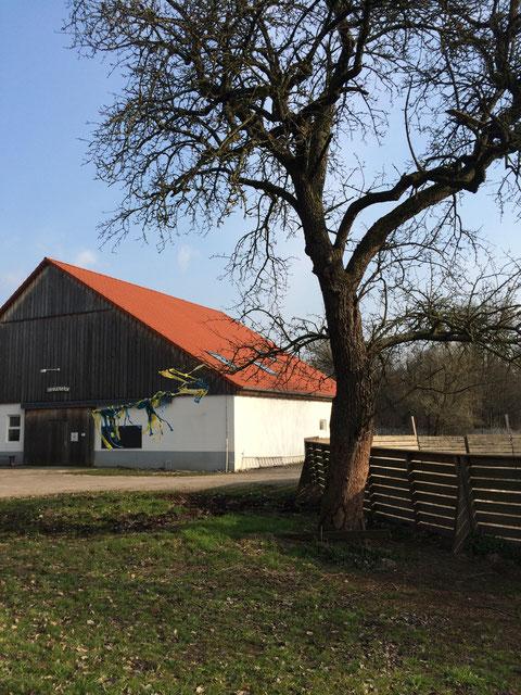 Ponybande Ponyreiten in Karlsruhe Birkenhof