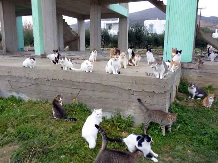 Streunerkatzen Adoption Paros
