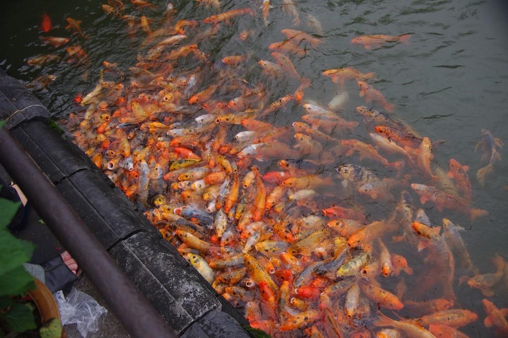 Auch Fische haben Hunger...