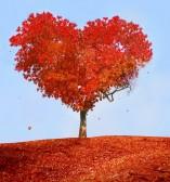 Saint-Valentin : arbre d'amour