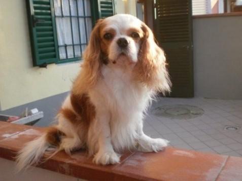 Willy, il nostro primo Cavalier!