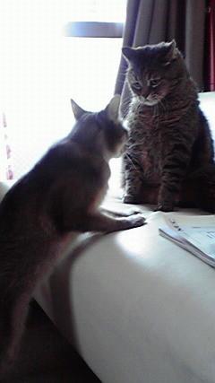 ポン「お隣イイですか?」ヒナ「む~り~」