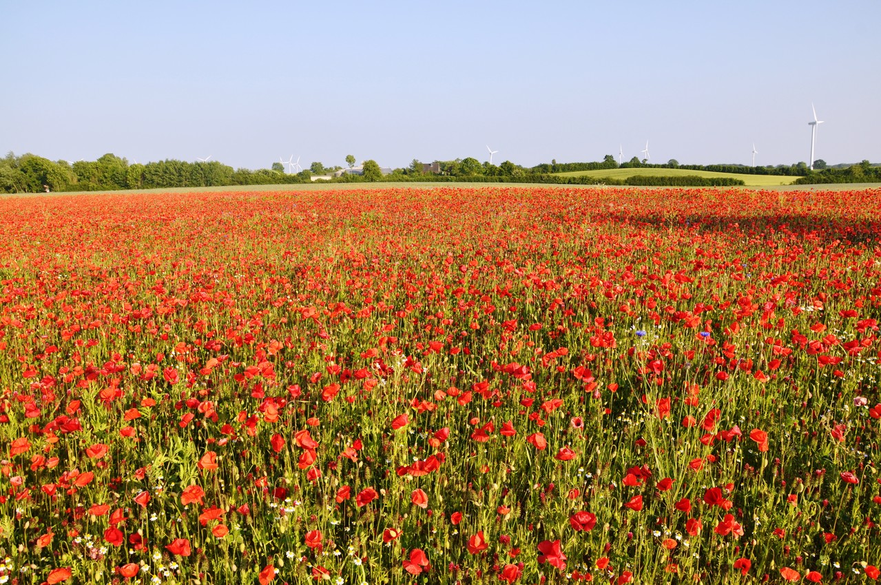 champs et fleurs dans les alentours