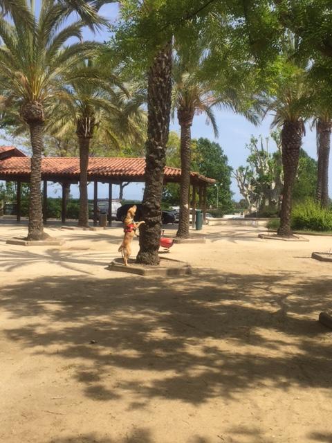 Asiatischer Laubholzbockkäfer Oetztallabrador Grace Spürhund