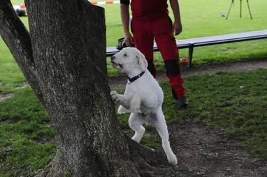 • Spürhunde haben in der Fokuszone elf Larven erschnüffelt. (hd)