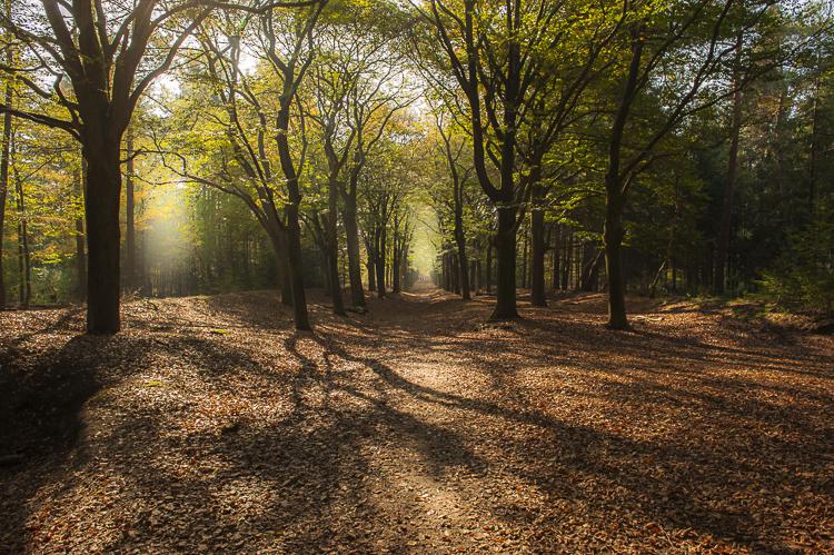 Een dampend herfstbos in de avondzon. Vaak maken schaduwen de chaos in een bos alleen maar groter, maar als je let op de ruimte en de richting waarin ze lopen kunnen ze juist een toegevoegde waarde hebben. Sluitertijd 1/60 sec., Diafragma F/16, ISO 500