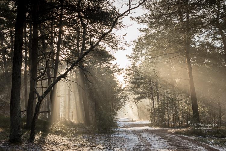 prachtig, bijna magisch, schouwspel Leuvenumse Bos